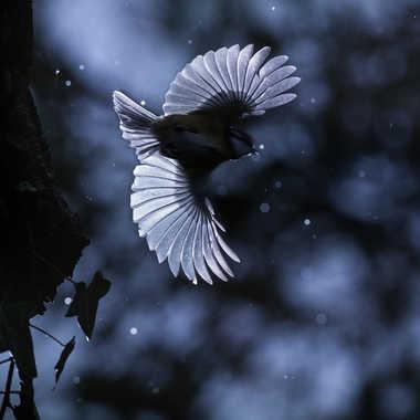 Deux ailes et un éclair par julien_86