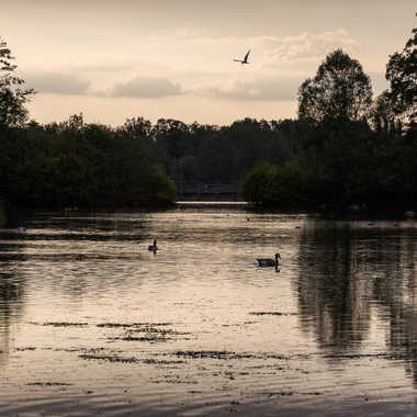 Soirée sur l'étang par HeleneA