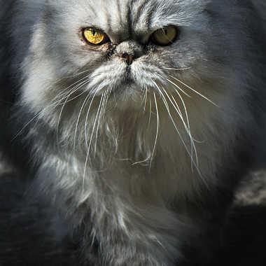 ♫ tout le monde veut devenir un cat ♫ par Nimo