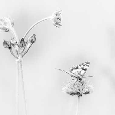 Ne sois pas timide dit la fleur, regarde moi ! par HeleneA