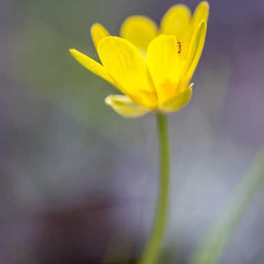 La fleur et la fourmis par Dav.sv