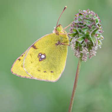 en jaune et vert par bobox25