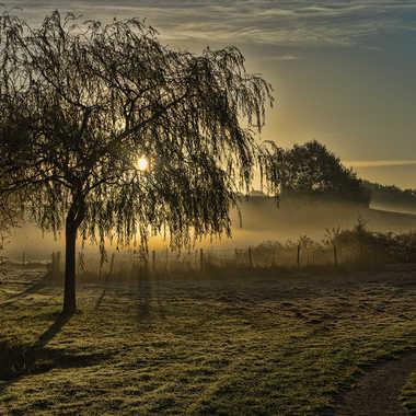 Brume matinale par Noric