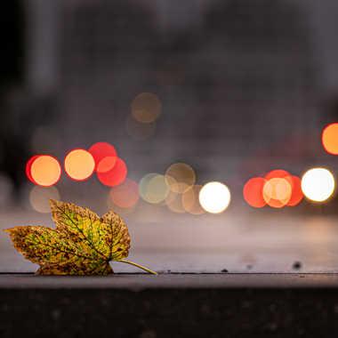 L'automne est là ! par Stefano