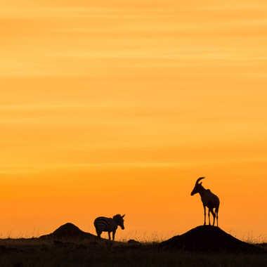 le jour se lève au Kenya par patouphoto