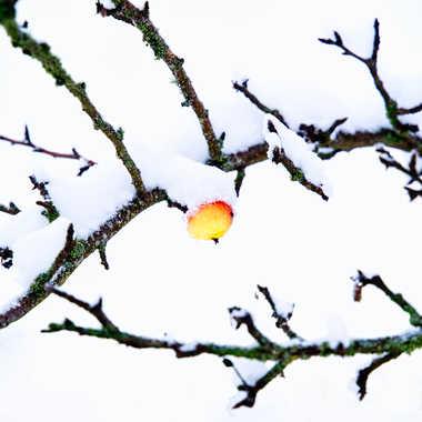 Sous un capuchon de neige. par FloRd