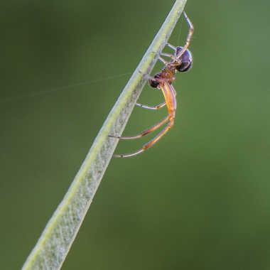 Jeune araignée du matin.. par Micheldechelles