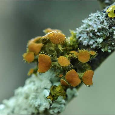 mousse ou lichens par genevieve_3824