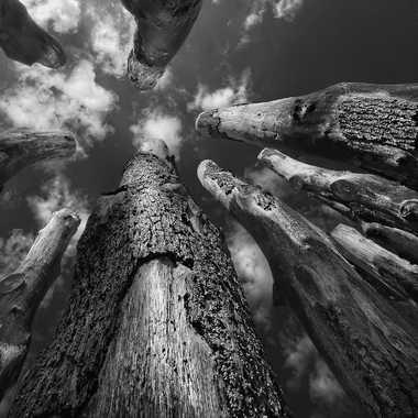Cheminées de bois par Nikon78