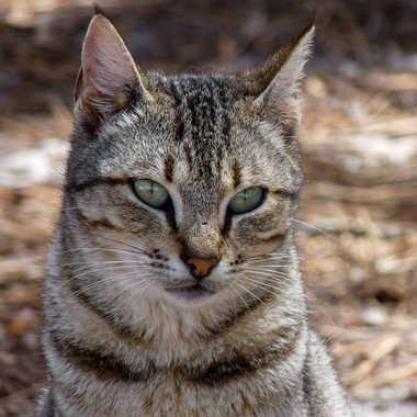 Le chat errant par Lilie