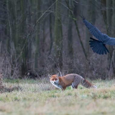 Le Corbeau et le Renard par jeromebouet