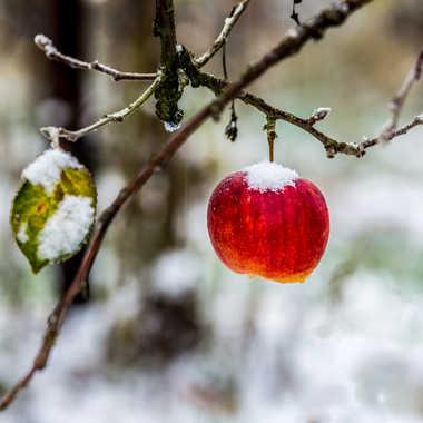 Fruit frais par Stefano