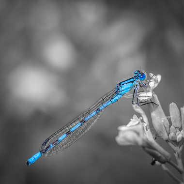 Diagonale bleue. par Franck06