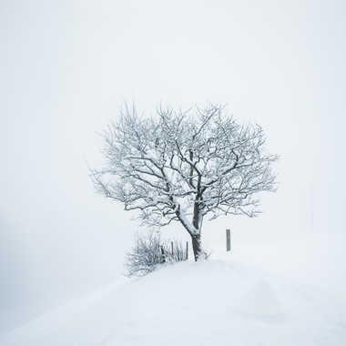 brouillard par philippe.manuel