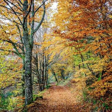 C'est l'automne #7 par Philoupi