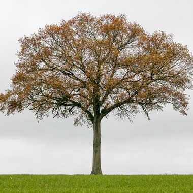 L'Arbre Couleurs d'automne par sylmorg