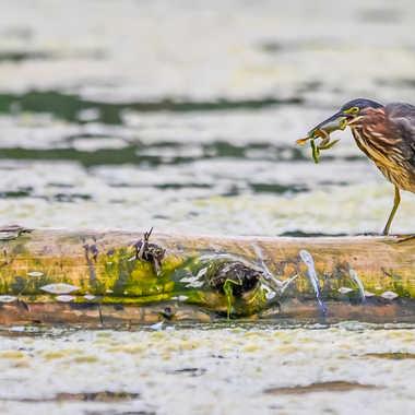 Dîner au grenouille par Dida