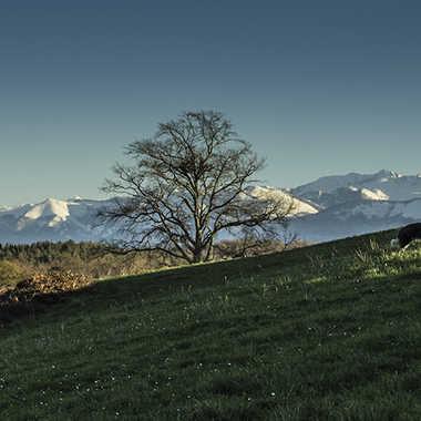 Pyrénées enneigées par Mylene.Lavie