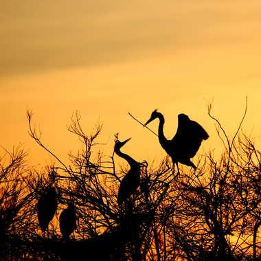 Le nid ... par Farim