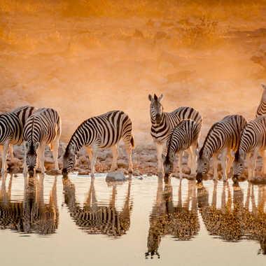 Zebras recto verso par Moira
