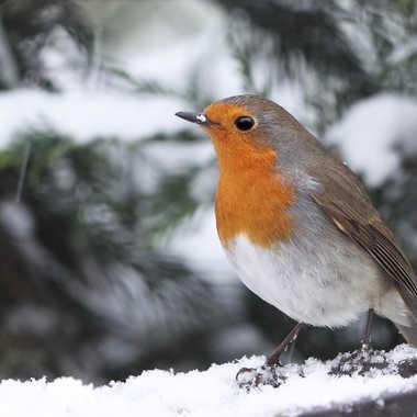 C'était l'hiver dans le fond de son coeur (F. Cabrel) par Yves B