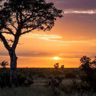 Sunrise sur le bush africain par patrick69220