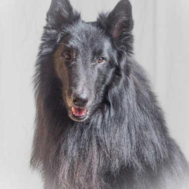 Portrait canin par patrick69220
