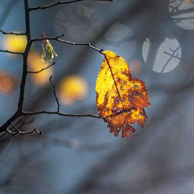 Attrape soleil par Valérie Tirard