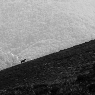 Le cheval et la colline par Dav.sv