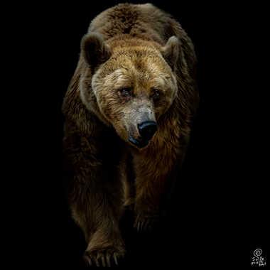 L'ours par SophieDel