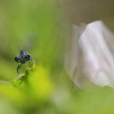Demoiselle curieuse ! par Farim