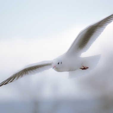 Déguisé en colombe... par Dav.sv