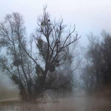 Brume sur la Saône par patrick69220