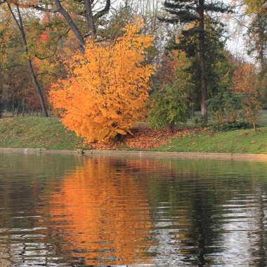 automne par lionel_4291
