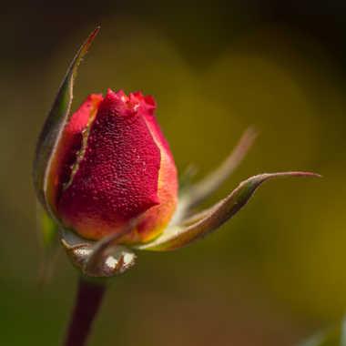 Naissance florale... par Philipounien