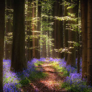 La forêt enchantée (2019) par marc_1328