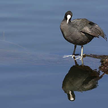 miroir oh mon beau miroir par Nikon78
