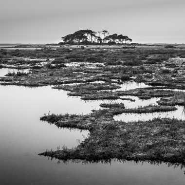 Lande bretonne par sylmorg