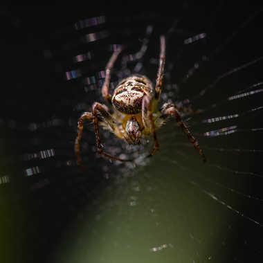 spider par NathalieR
