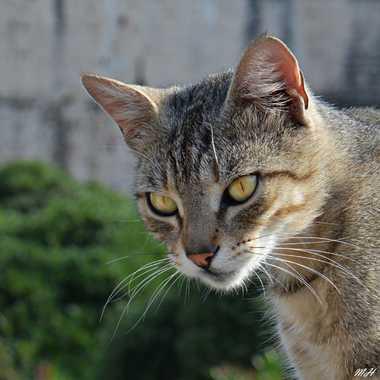 Chat au carré par mamichat