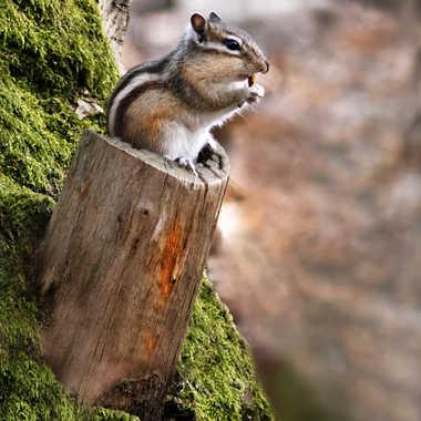 Je trône par Nikon78