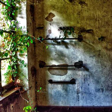 La Nature reprend ses droits par Valérie Tirard