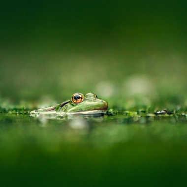 La mare aux grenouilles par MiK5370