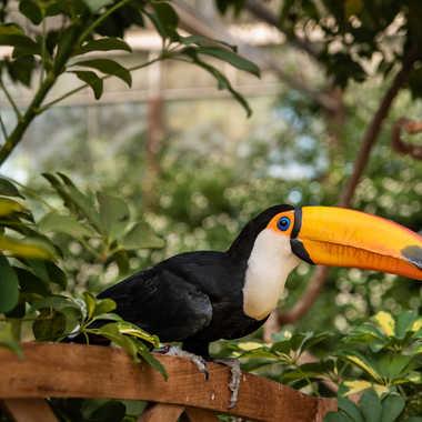 le toucan par bobox25