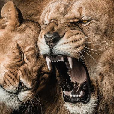 King Lion par james_1068