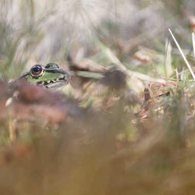 Tapis dans l'herbes par patrick69220