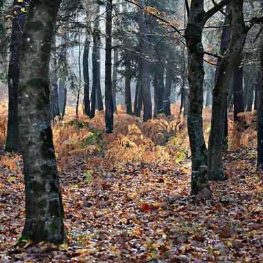 Balade d'automne par mamichat