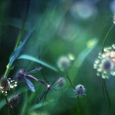 Un goût de printemps par Valérie Tirard