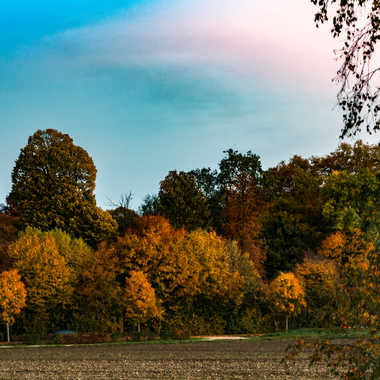 bel automne sous ciels rosé par LABADIE