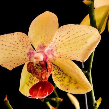 orchidée par brj01